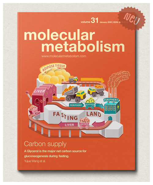 MOLECULAR METABOLISM Vol. 31